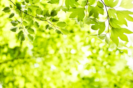 environmental issues: Fresh green leaves