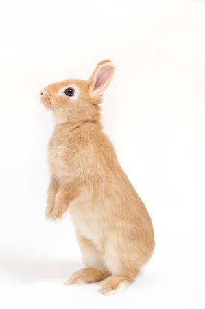 white rabbit: Rabbits