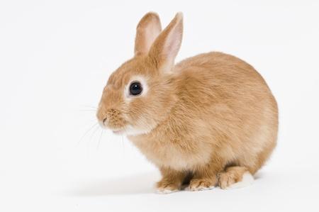 conejo: Conejos Foto de archivo