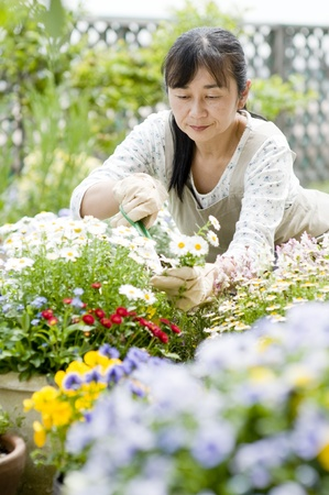 Woman gardening, photo