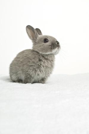 white rabbit: Baby Rabbit Stock Photo