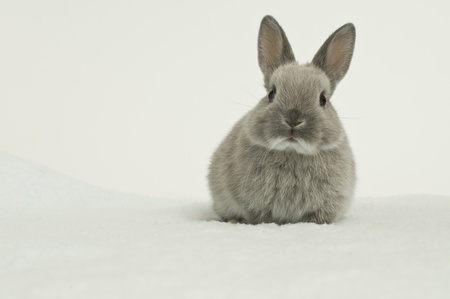 Baby Rabbit photo