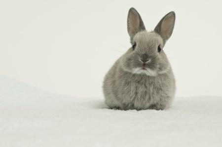 Baby van Rabbit Stockfoto