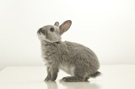 赤ちゃんウサギ