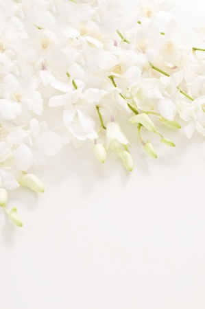funeral:  white orchid