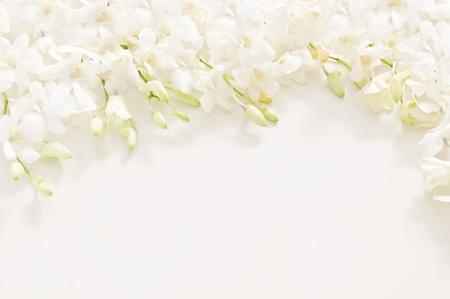 захоронение: Белая орхидея