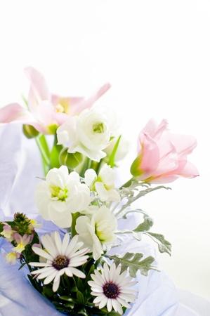 senecio: flower arrangement Stock Photo