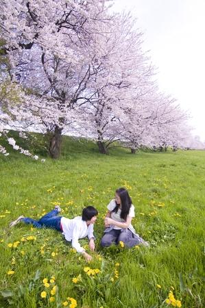 flor de cerezo: flor del cerezo Foto de archivo