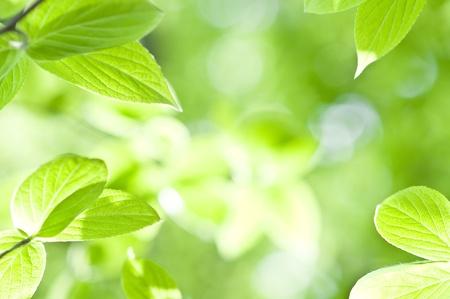 Frescas hojas verdes