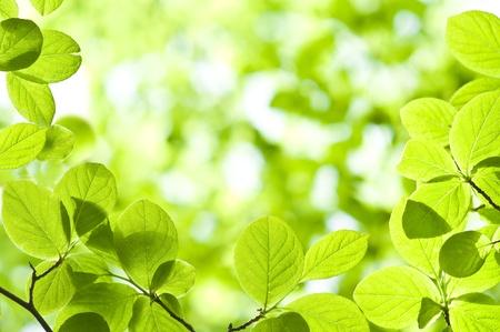 新鮮な緑の葉