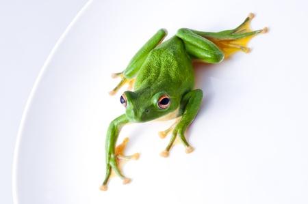 tree frog: Frog Stock Photo
