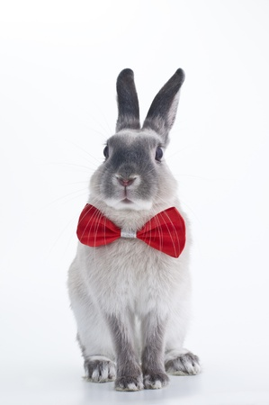 Rabbit red bow tie Stock Photo
