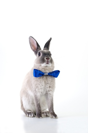 Rabbit dress photo