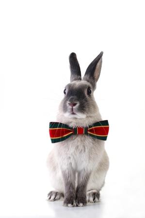 conejo: Conejo de Navidad vestido Foto de archivo