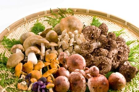 fall mushroom: mushroom, natural