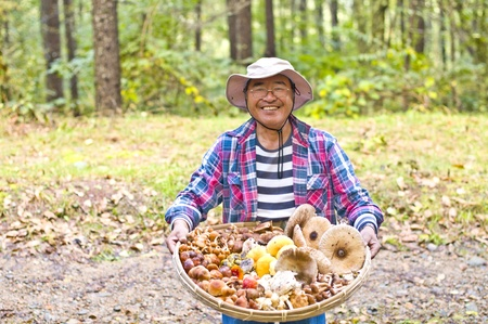 mushroom picking: mushroom picking Stock Photo