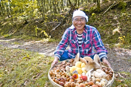 mushroom picking: mushroom picking Stock Photo