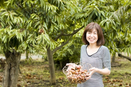 chestnut picking up Stock Photo - 12693546