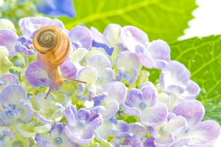 early summer: snails