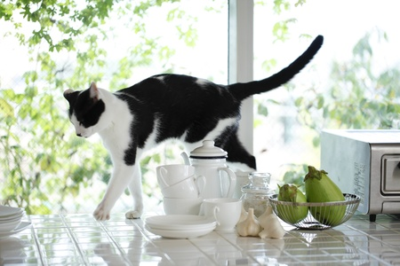Cat in the kitchen, photo