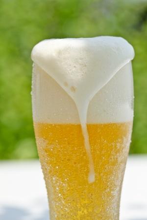 beer Stock Photo - 12694432