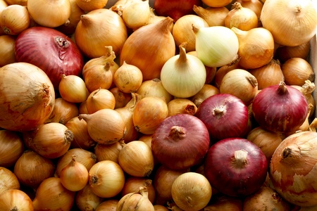 onions: cebollas Foto de archivo