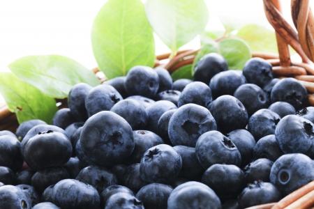 ブルーベリーの収穫 写真素材