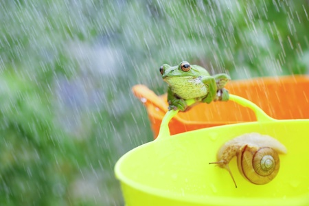 Frogs and snails photo