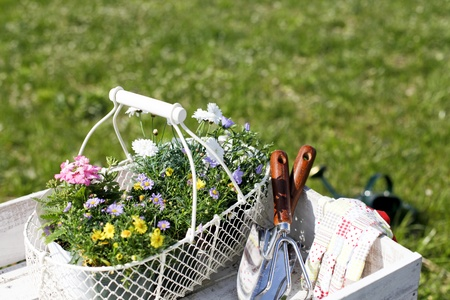 gardening gloves: gardening