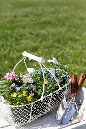 flower baskets: gardening