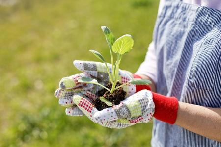 Ogród warzywny Zdjęcie Seryjne