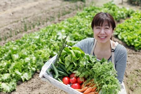 Oogst van groenten Stockfoto