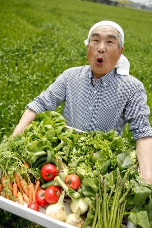 ser humano: Cosecha de hortalizas Foto de archivo