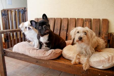 Dogs Stock Photo - 18311503
