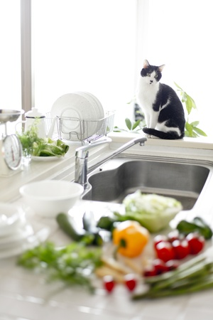 Living with Pets Stock Photo - 18325663