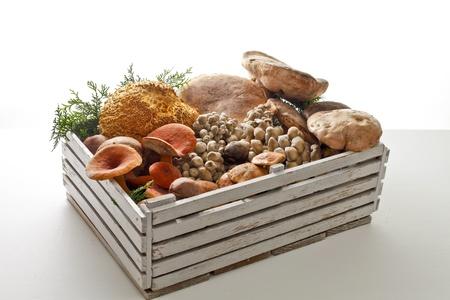 shiitake: Natural mushroom harvest Stock Photo
