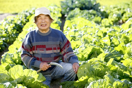 With vegetables harvested Stock Photo - 18484460