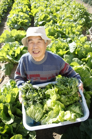With vegetables harvested Stock Photo - 18484461