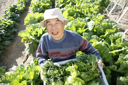 With vegetables harvested Stock Photo - 18484488