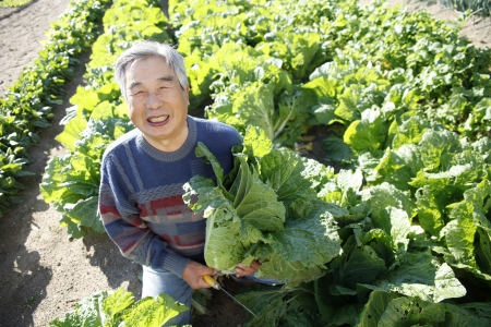 With vegetables harvested Stock Photo - 18484462