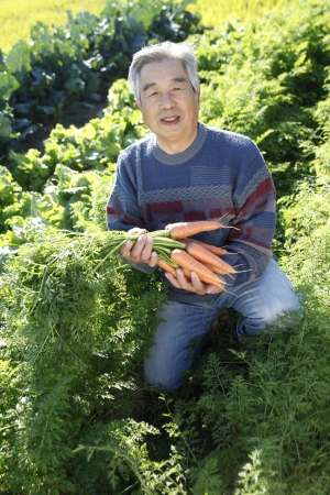 With vegetables harvested Stock Photo - 18484490