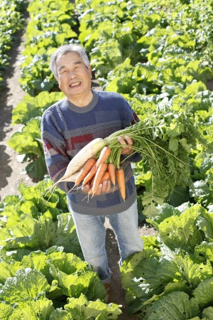 With vegetables harvested Stock Photo - 18484484