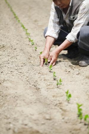 Planting Stock Photo - 18484708