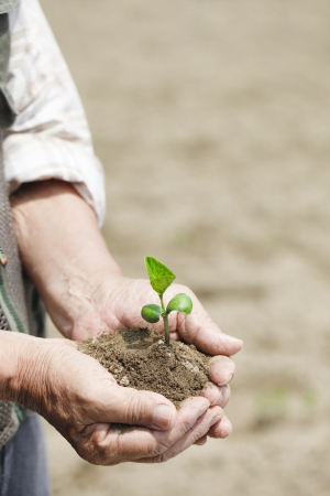 With the seedling Stock Photo