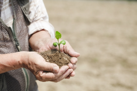 humus: With the seedling Stock Photo