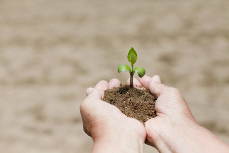 conceiving: With the seedling Stock Photo
