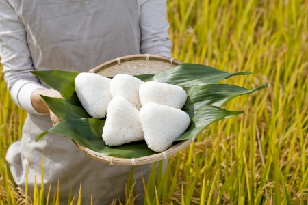 Rice balls made   8203;  8203;with rice harvest photo