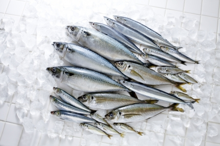 calmar: Fresh fish Stock Photo