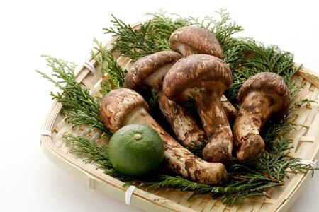 fall mushroom: Matsutake mushroom Stock Photo