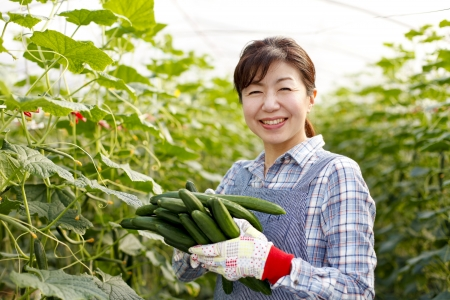 asian produce: Harvest of cucumbers
